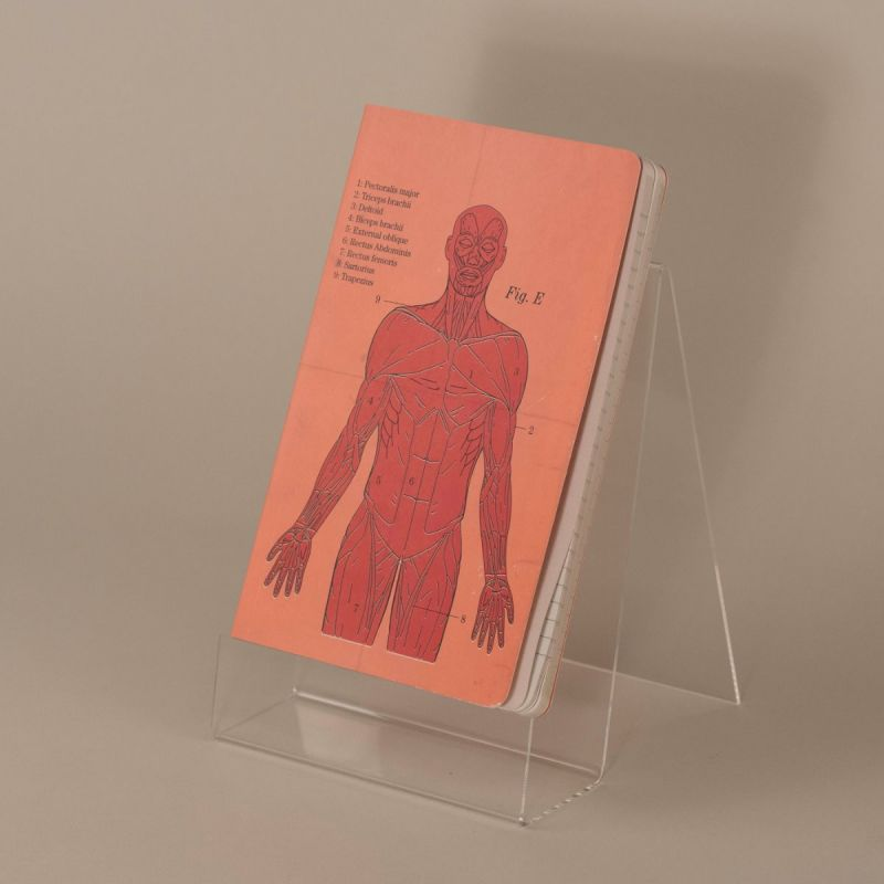 Notesbog med kroppens muskler 1