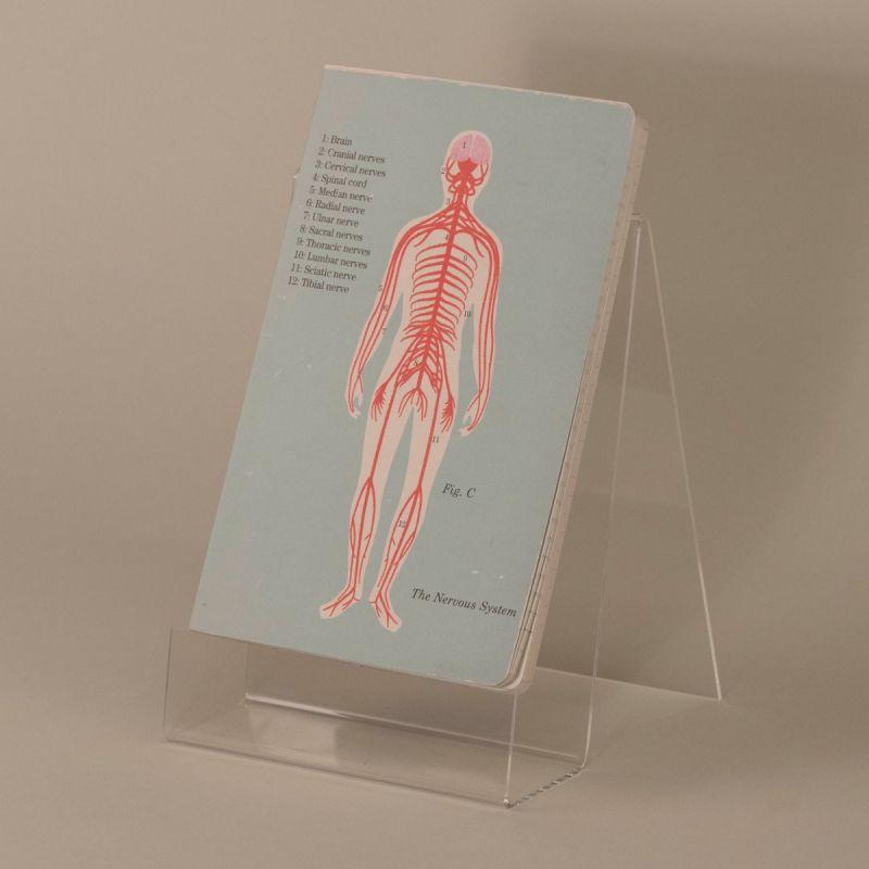 Notesbog med nervesystemet 1