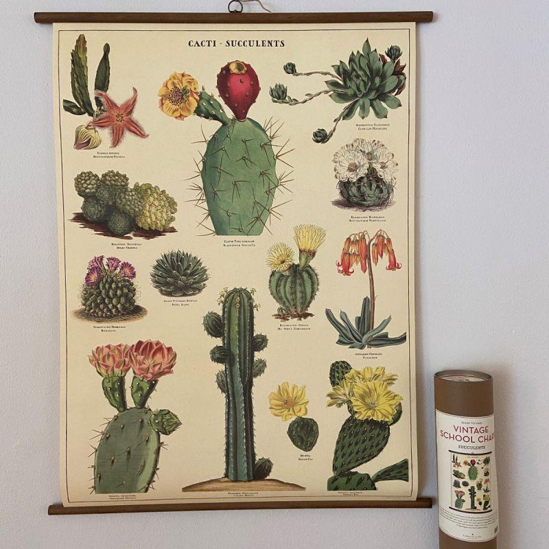 Rullekort, vintage, kaktus og sukkulenter 1