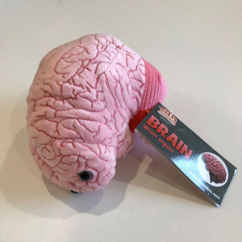 Hjerne 1