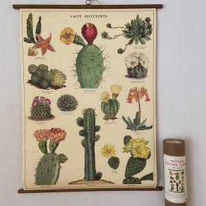 Rullekort, vintage, kaktus og sukkulenter