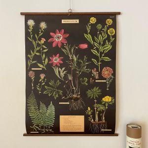 Rullekort herbarium