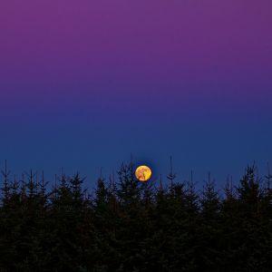 Fuldmåne. Foto: Jesper Grønne